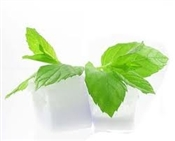 PURE MENTHOL EXTRACT Flavoring